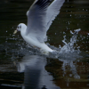 Thumbnail image for Canon C300 video – Grand Union Canal, Hertfordshire, UK